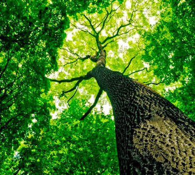 Solihull tree care services