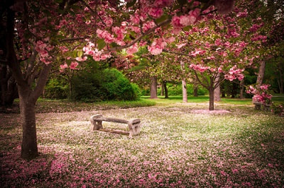 a park bench in the spring time